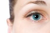 Eyelid Mites